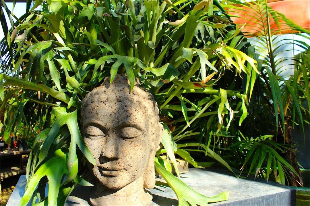Bright edge yucca diana 39 s designs austin - Medusa head planter ...