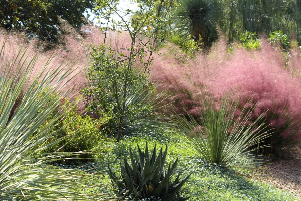 photo of fountain grasses in the landscape