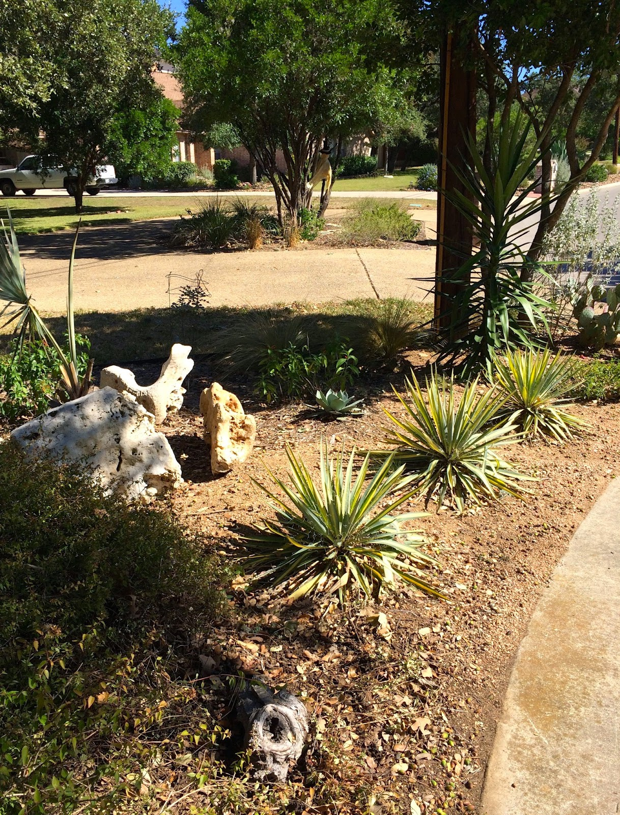 Hill Country Garden Charm In The Heart Of San Antonio Diana39s