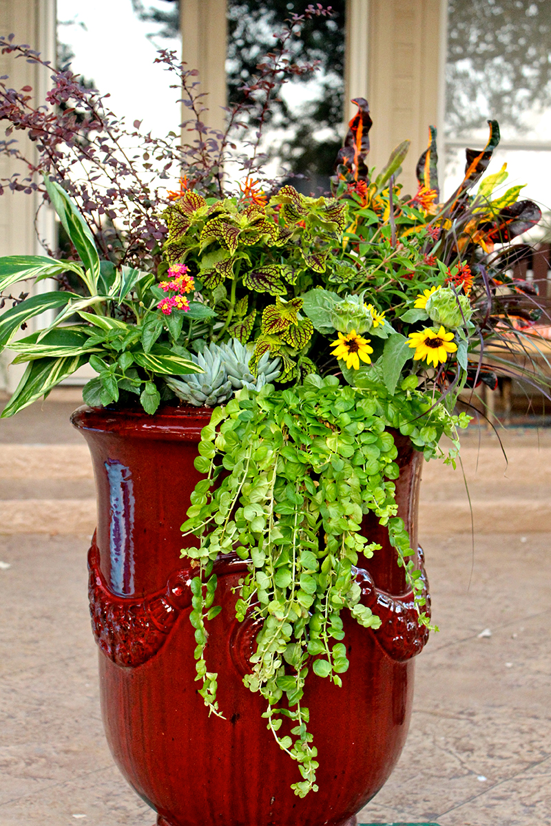 tall-container-fall-flowers