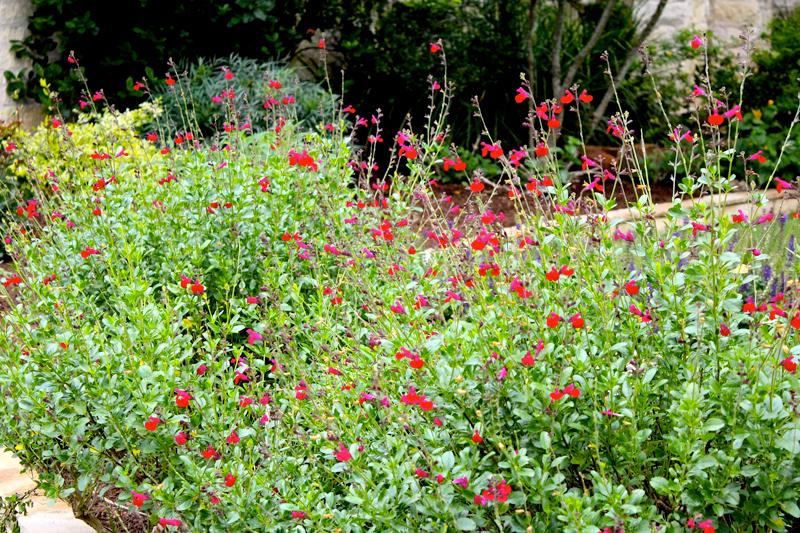 Prune-Now-Blooms