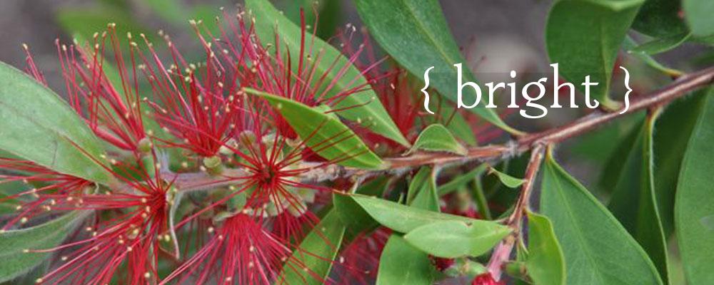Diana's Designs Austin Landscape Design Garden Plan Bright Drought Tolerant Plants