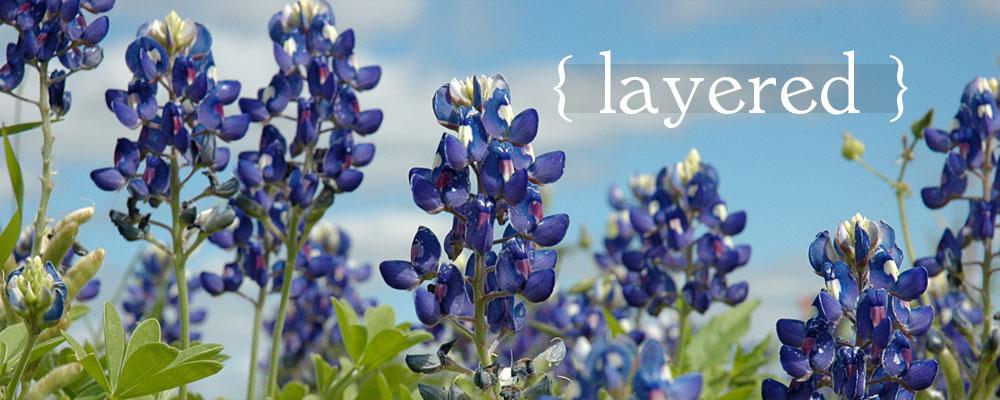 Dianas Designs Austin Landscape Garden Design Layered Native Plants