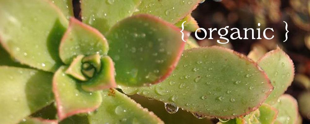 Dianas Designs Austin Landscape Design Garden Plan Organic