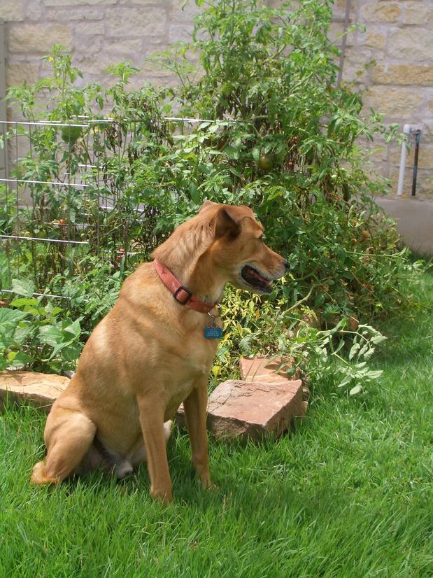 Tanner, Diana Kirbyu0027s Dog ...