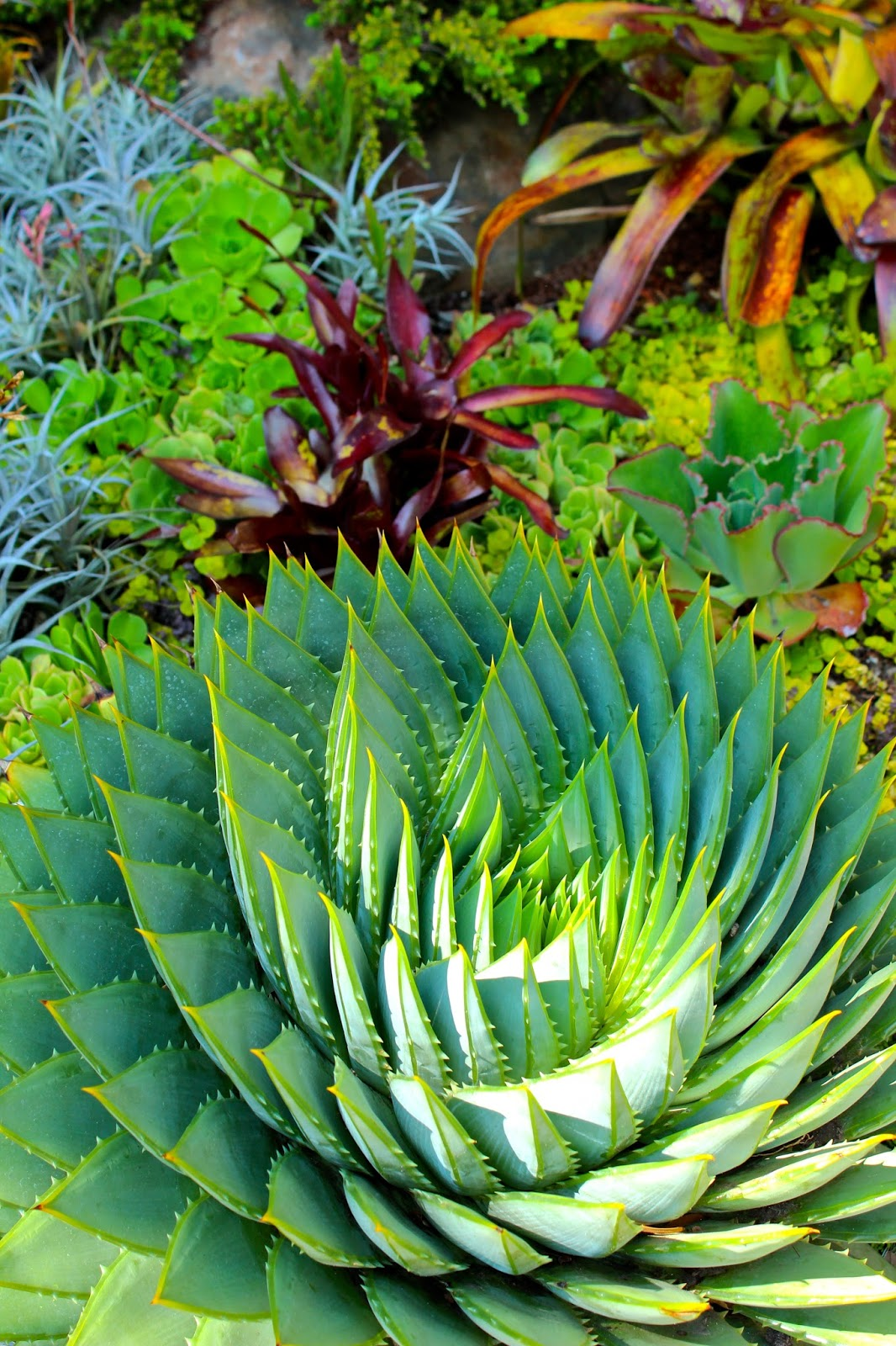 Stunning san francisco fling garden tour of my dream for Plants for outdoor garden