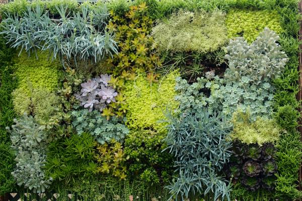 Sharing nature 39 s garden archives diana 39 s designs austin for Indoor gardening diana yakeley