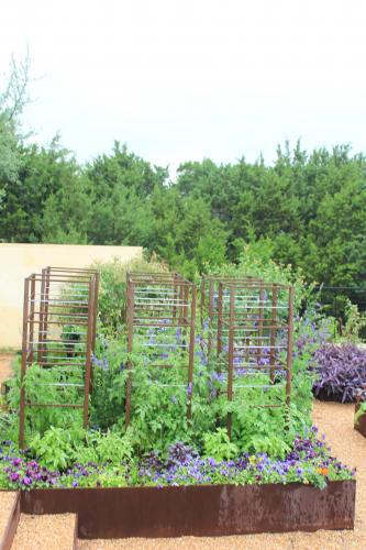 xeriscaping Archives | Diana's Designs Austin on